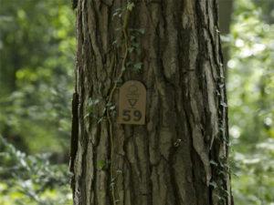 Waldbestattung in Österreich